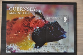 GUERNSEY VISSEN FISHES POISSONS ++ H 256
