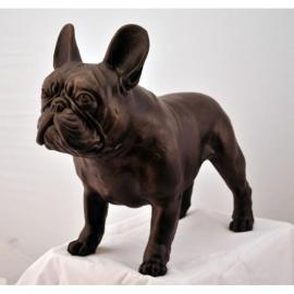Groot Franse bulldog beeld staand