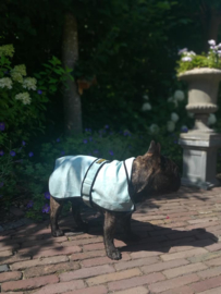 Cool-Jacket maat M  51 cm (Franse bulldog) Mint