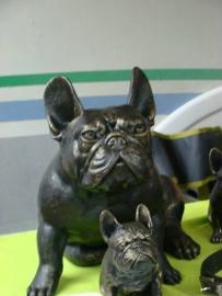 Groot Franse bulldog beeld zittend