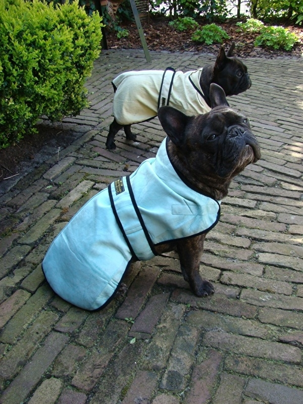 Cool-Jacket maat S - X-wide  46 cm (Franse bulldog) - Mint