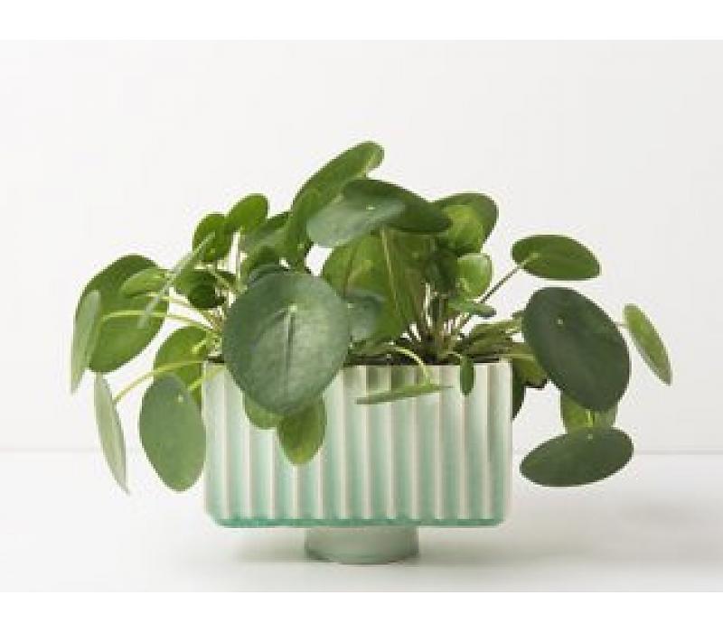 flowerpot ceramics green
