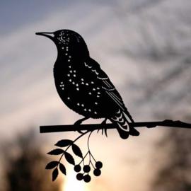 Geluksvogel : silhouet van een spreeuw levensgroot