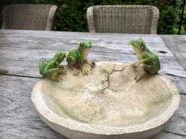Kikkers op vogelbadje/ voerbakje