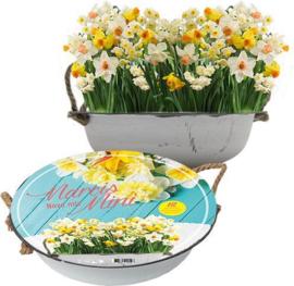 Cadeaubox Narcissus Mini Mix in Teil