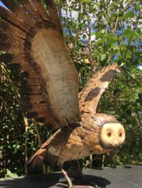 Beeld vliegende Uil