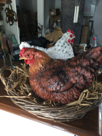 Bruine kip zittend