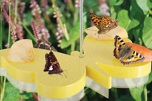 Vlinder uit de Landleven!