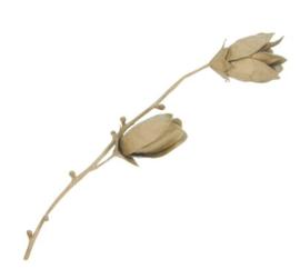 Magnoliatak, HD026