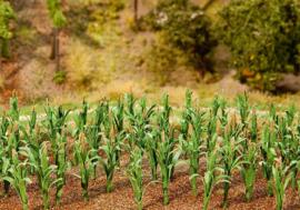 Faller 181250 36 maïsplanten