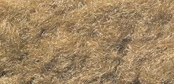 WLS FL632 Harvest Gold