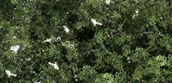 WLS F1131 Medium Green