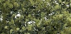 WLS F1133 Olive Green