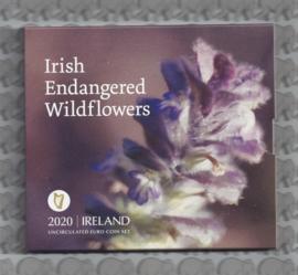 Ierland BU set 2020