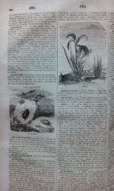 prachtig oud frans woordenboek