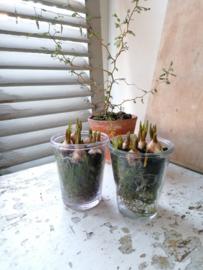 Oude glazen potjes , confiture potten.