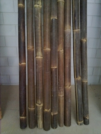 Bamboestam zwart per meter (diameter 6-10 cm)