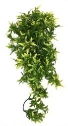 CROTON PLANT 40CM