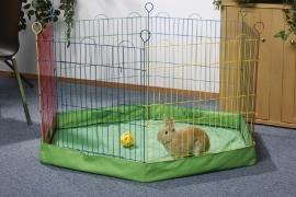Buitenren gekleurd konijn cavia