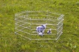 Buitenren konijn cavia