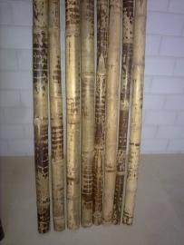 Bamboestam tijger per meter (diameter 6-10 cm)