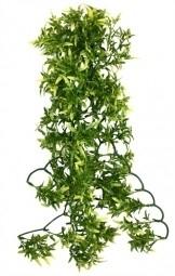 CROTON PLANT 60CM