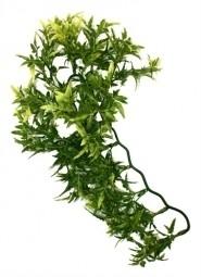 CROTON PLANT 30CM
