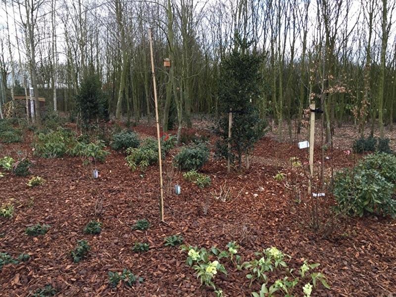 Franse boomschors 20-40 mm 1000 Liter afgehaald