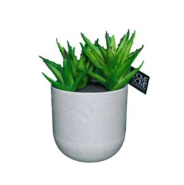 Vetplant in grijze pot 12,5x20 cm