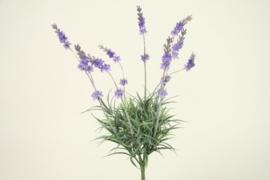 Lavendel bundel