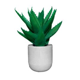 Vetplant in grijze pot 12,5x29 cm