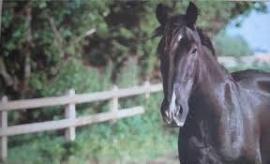 Esschert Design Deurmat Paard