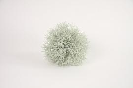 Decoratieve Bol Helichrysum