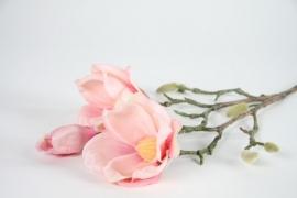 Magnolia perzik