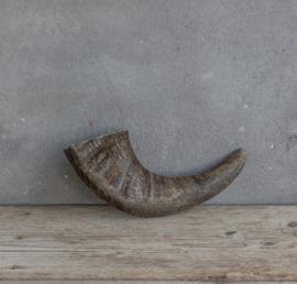 Buffalo hoorn 25/30 cm