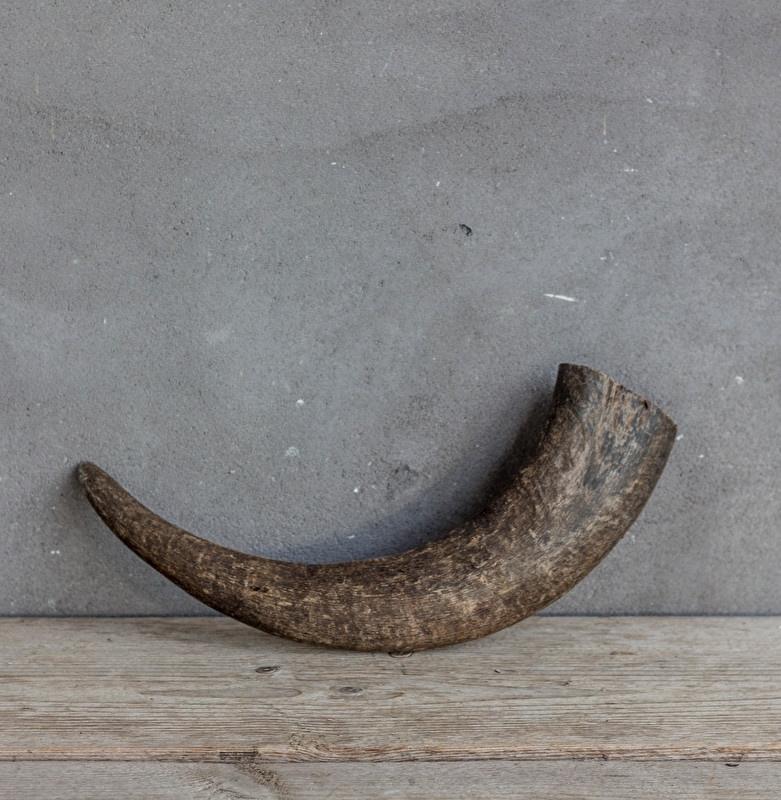 Buffalo hoorn 30/40 cm