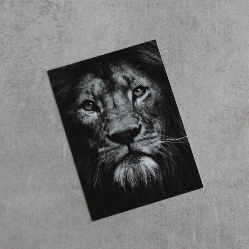 Kaart 'Leeuw' 10x15 cm