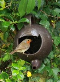 Teapot robin nester