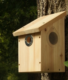 Camera Ready Nest Box, with clip