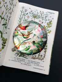 Presse papier met kolibries