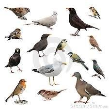 tips voor vogels in de tuin