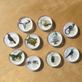 10 Glazen magneten Ø 3cm Natuur divers