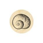 Land Snail Shell Large 19 mm