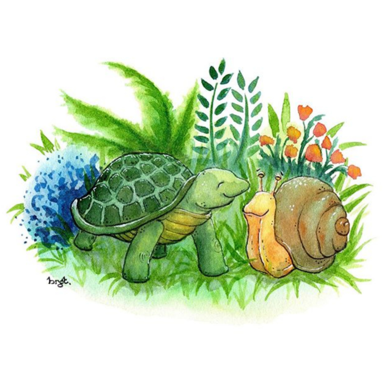 Schildpad en slak