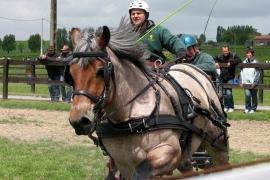 Ideal Trekpaard Hoofdstel met hele of halve oogkleppen