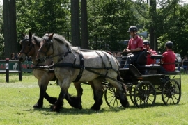 Ideal LeatherTech tweespan trekpaard Broek