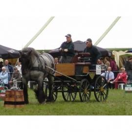Ideal Trekpaard enkelspan Borst