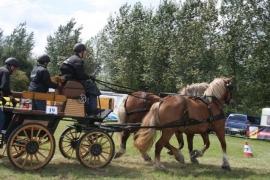 Ideal Trekpaard Staartriem met culeron