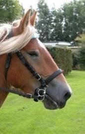 Ideal Trekpaard Hoofdstel zonder oogkleppen