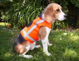 Veiligheidsvest HOLSTEIN neon oranje